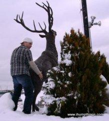 deer_humping_vegas